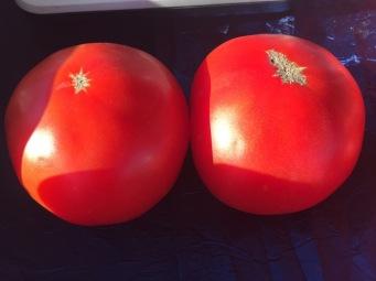 Beefsteak style tomatoes