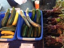 Cucumbers/Squash